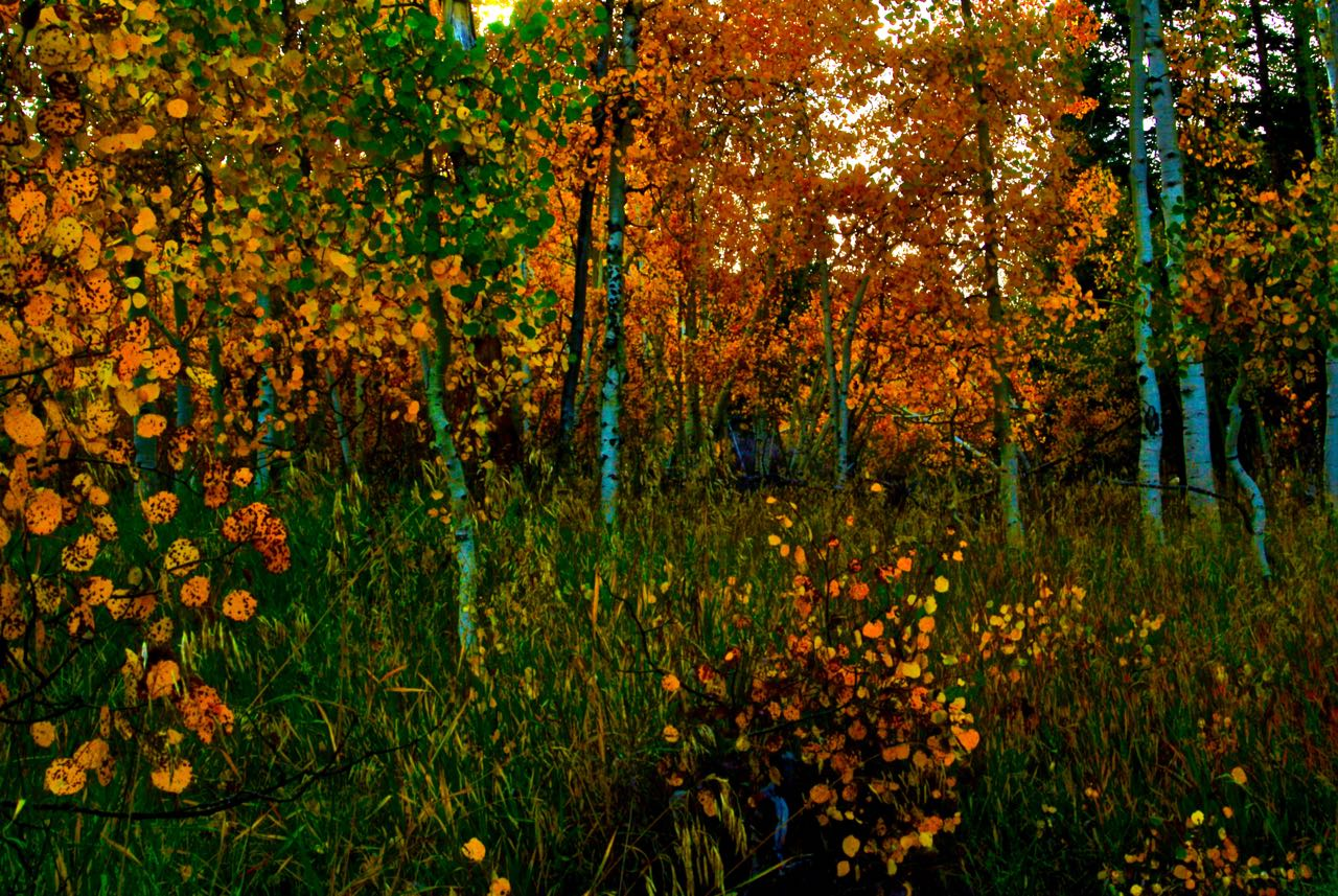 Utah Fall Photography
